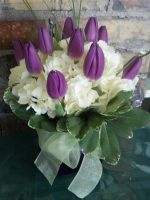 MD 55  Tulip Hydrangea 55.00